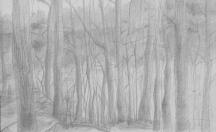 """Woods"", Adriana Burgos, silverpoint on plike paper 11"" x 8.5, 2014"